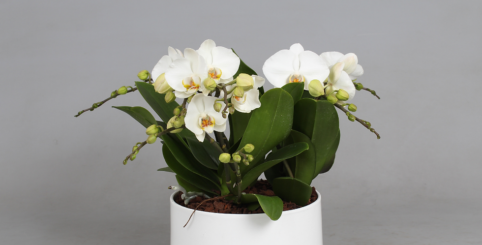 Plantenbak Orchidee Elegant Bambino