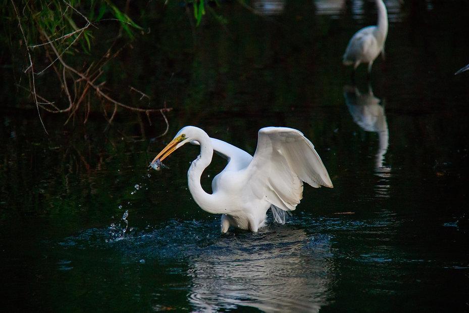 Louisiana Bayou by May at Unsplash