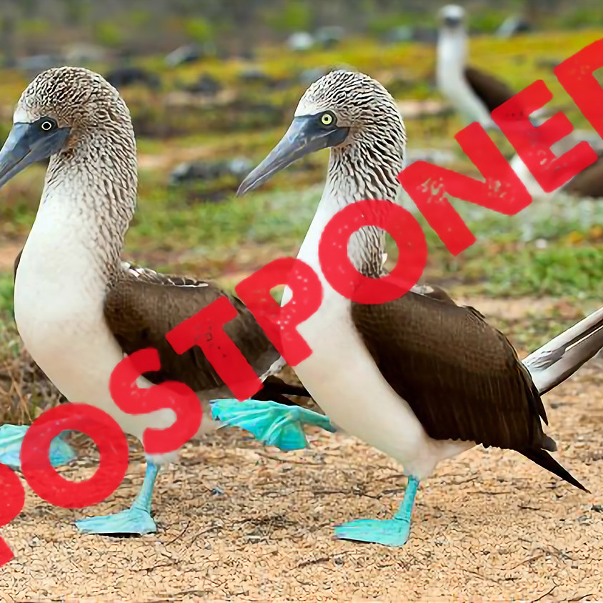 Galapagos Islands Safari (March)