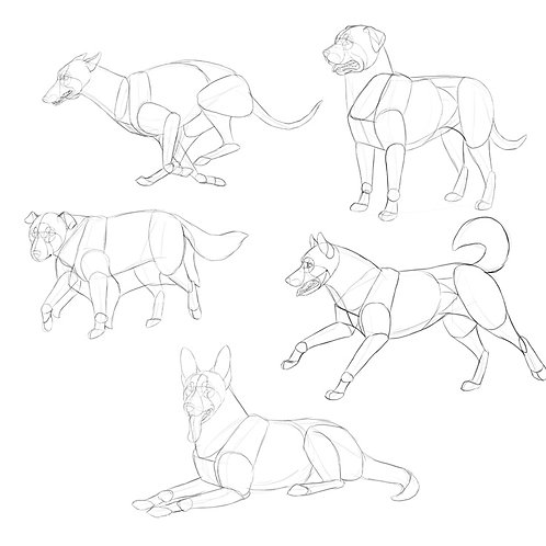 Beginners: Draw your dog from a photograph - with Jo Harris, 30 mins