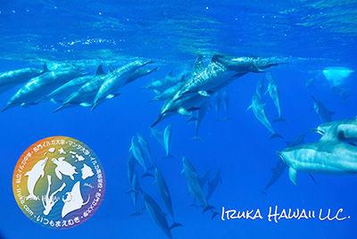 IRUKA-HAWAII-LLC.jpg