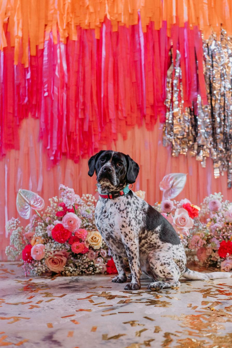 colourful wedding streamer backdrop