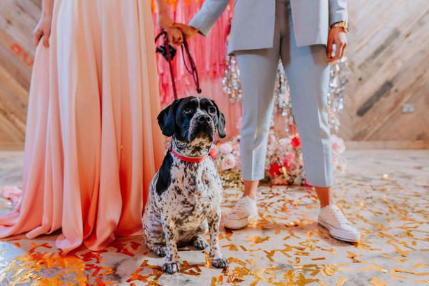 dog ring bearer wedding couple