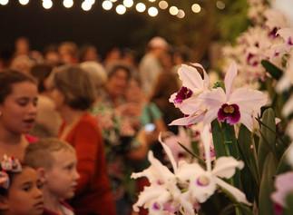Festa das Flores de Joinville não será realizada em 2020