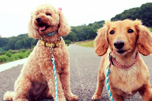 犬のリード|多頭用リード|パラコード