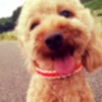 犬の首輪|パラコード