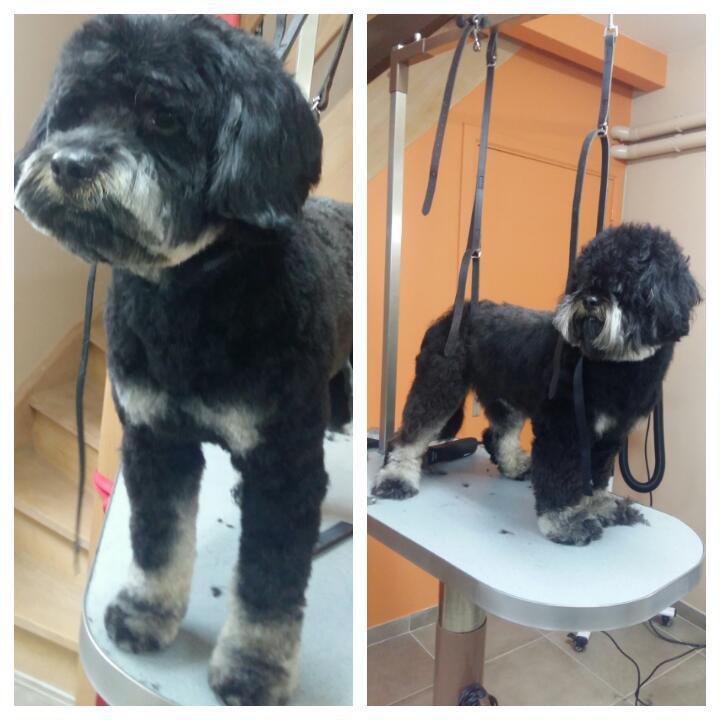 Wouf Toilettage Waterloo -Terrier Tibetain