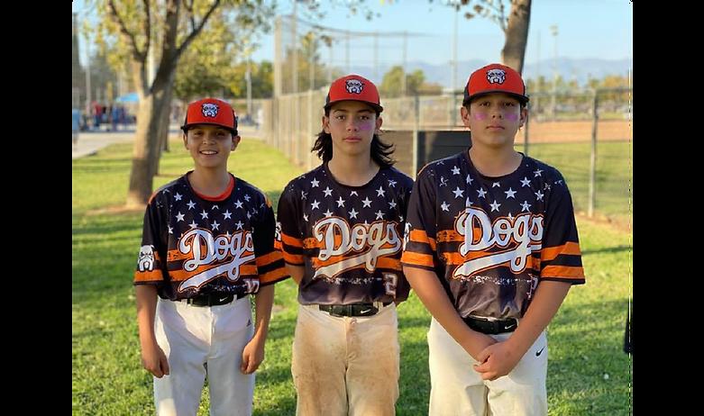 dogs baseball.png