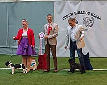 Norwegian Bulldog Club.jpg