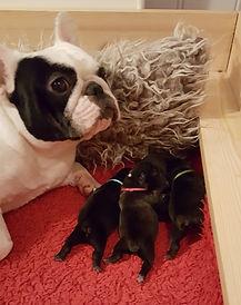 Puppies 2019.jpg