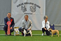 Norwegian Bulldog Club - 100 years anniv
