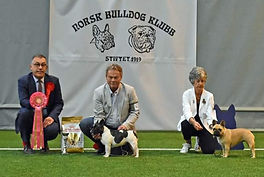 Norwegian Bulldog Club - 100 years anniv