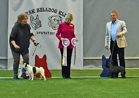 Norwegian Bulldog Club  100 years annive