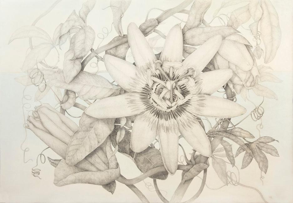 Pasiflora Tapiega.jpeg