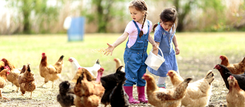 Learn English on the Farm!