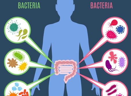 Intestino e Saúde - Conhecendo a Importância de Nossa Flora Intestinal ou Microbiota Intestinal - Pa