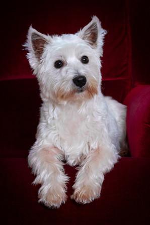 dog-portrait-at-home.jpg