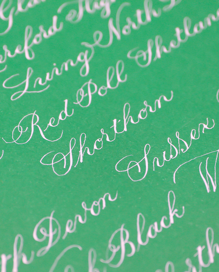 great-british-cow-breeds-calligraphy-sho