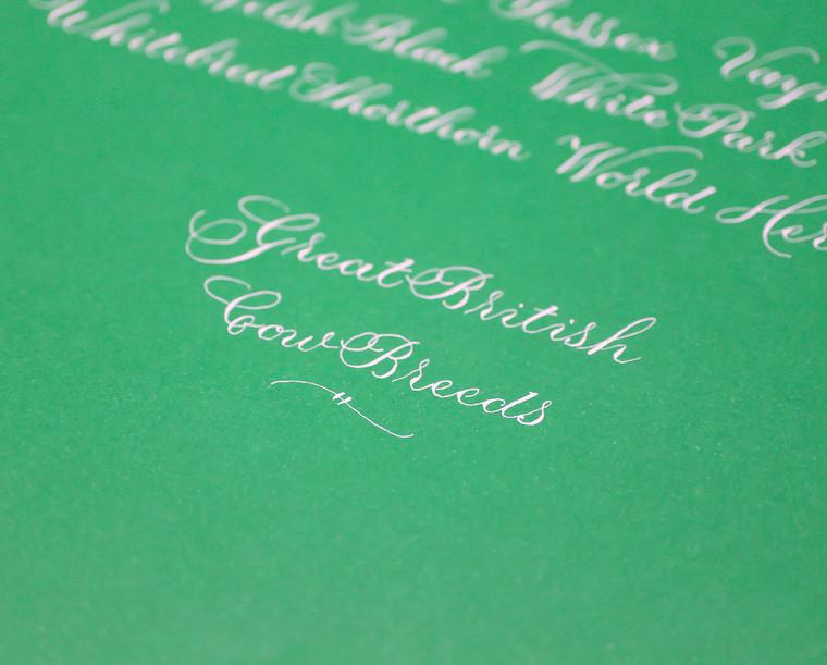 great-british-cow-breeds-calligraphy-tit