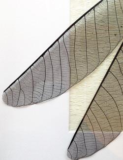 sumi-ink-dragonfly-black-artwork-wings