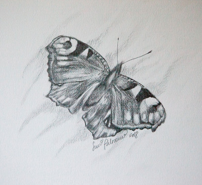 Neitoperhonen / Butterfly