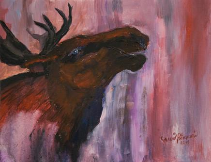Hirvi /Elk