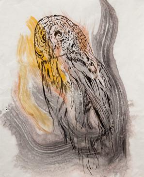Pöllö / Owl