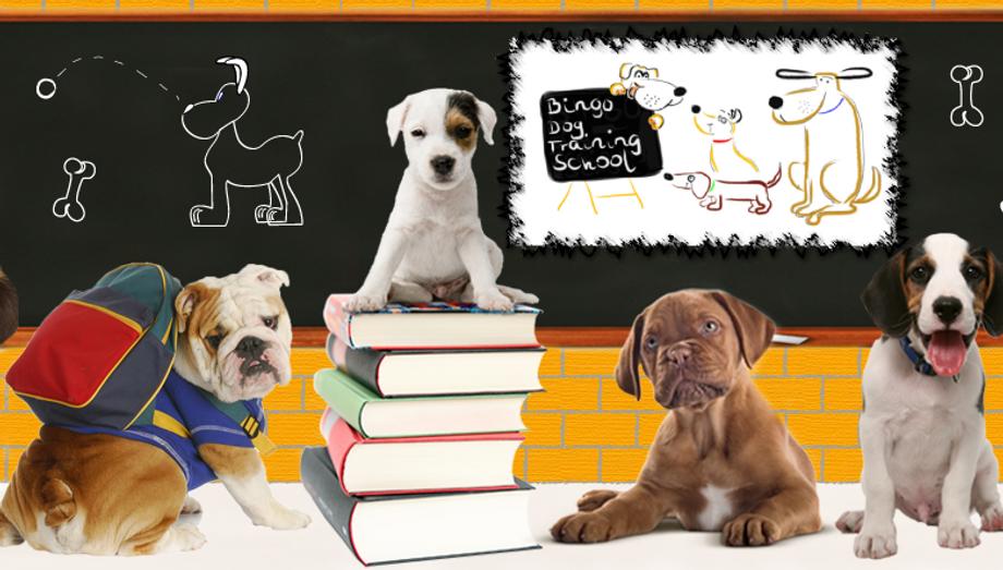 Image result for dog school