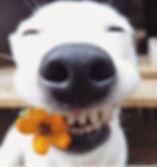 smiling dog.jpg