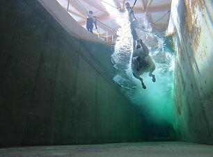 Unterwasser_Schimmel.jpeg