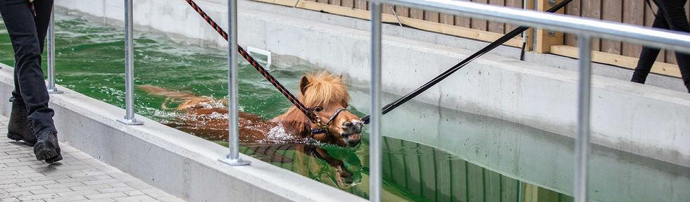 schwimmbad_main.jpg