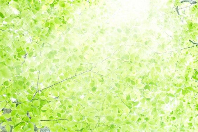247220_s_edited.jpg