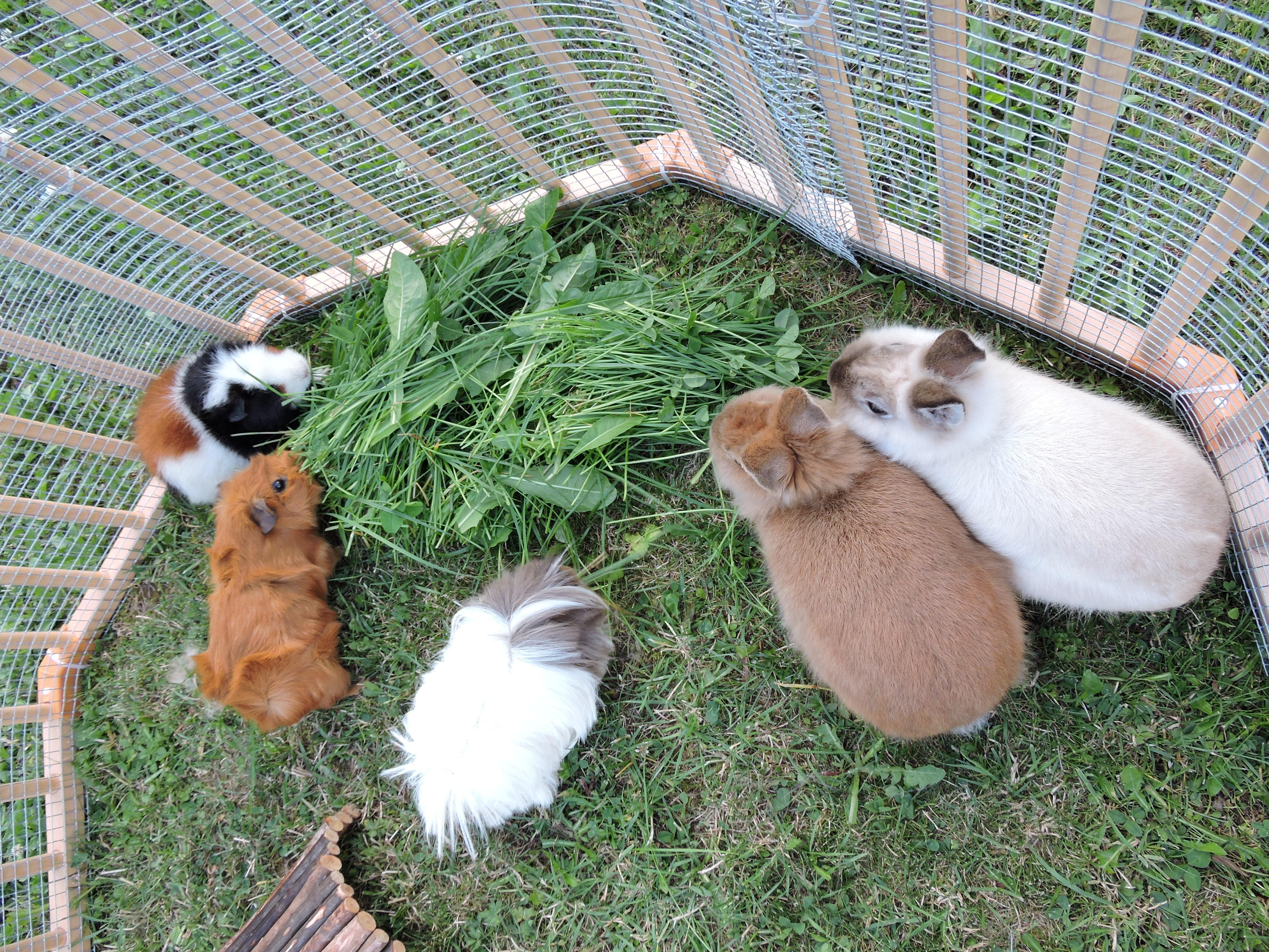 Festin dans la pelouse
