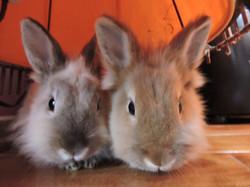 Nos lapines