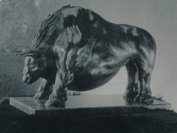 bull_001.jpg