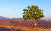 6_Provence.jpg