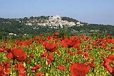 4_Provence.jpg