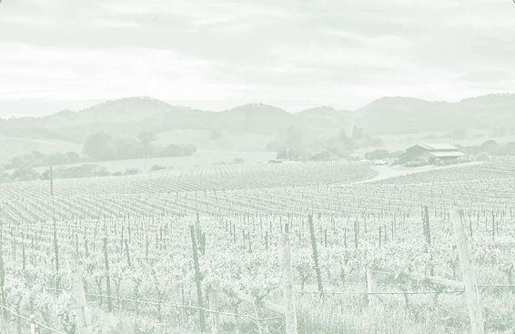vineyard%252520duotone_edited_edited_edi