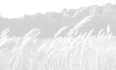 Wheat%2520Field_edited_edited.jpg