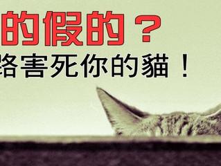 真的假的?網路害死你的貓!