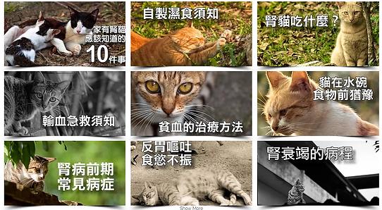 台灣腎貓協會|2017贊助會員★助腎貓|腎貓照護|捐款|公益|贊助|急難救助|動物保護