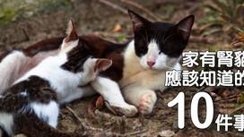 家有腎貓★應該知道的10件事