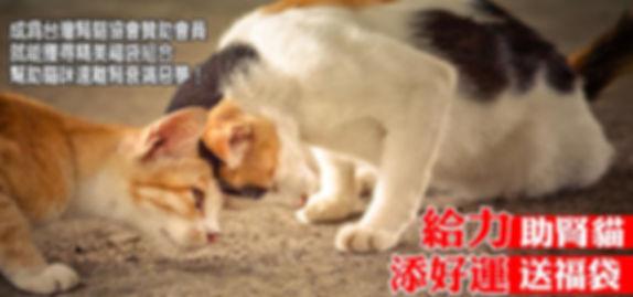 台灣腎貓協會 助腎貓★送福袋