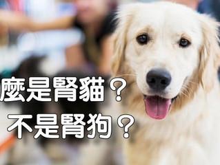 為什麼是腎貓?不是腎狗?