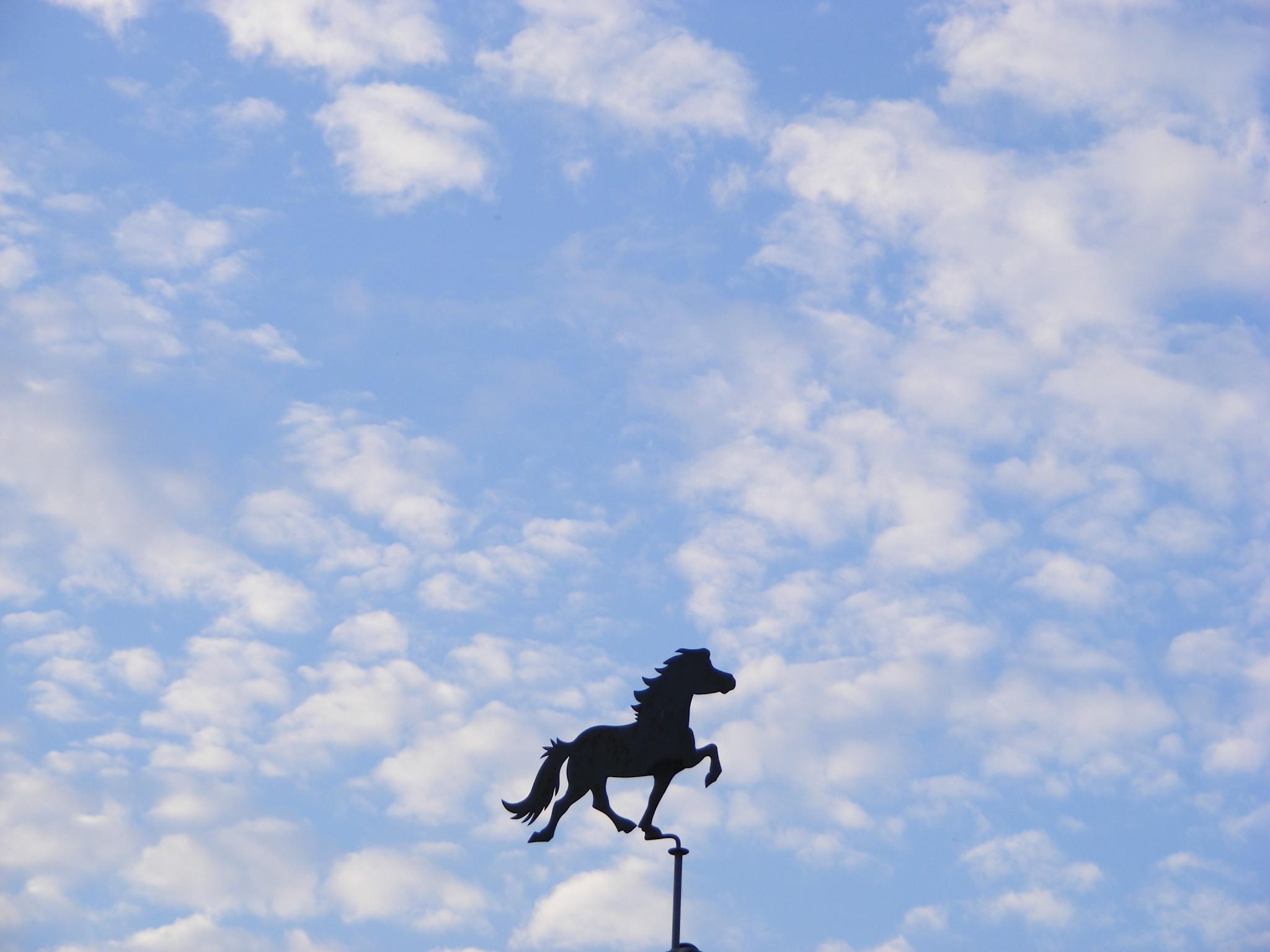 Besti Vinur Horsemanship
