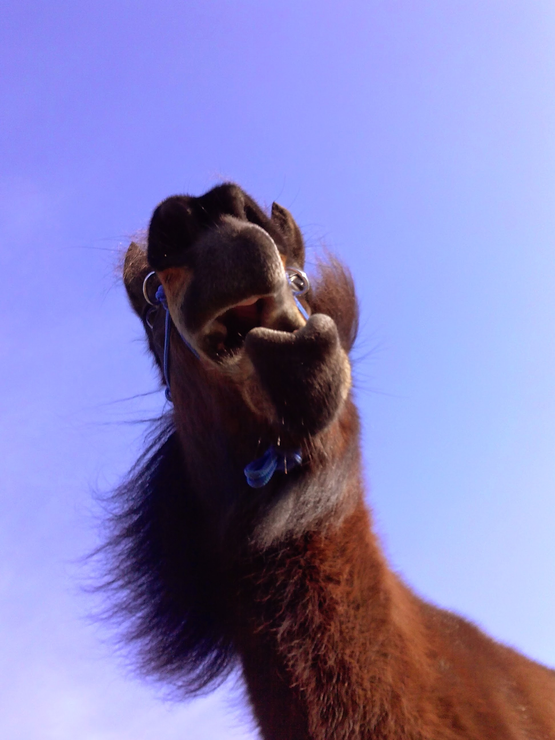 Eigenwijze paarden?