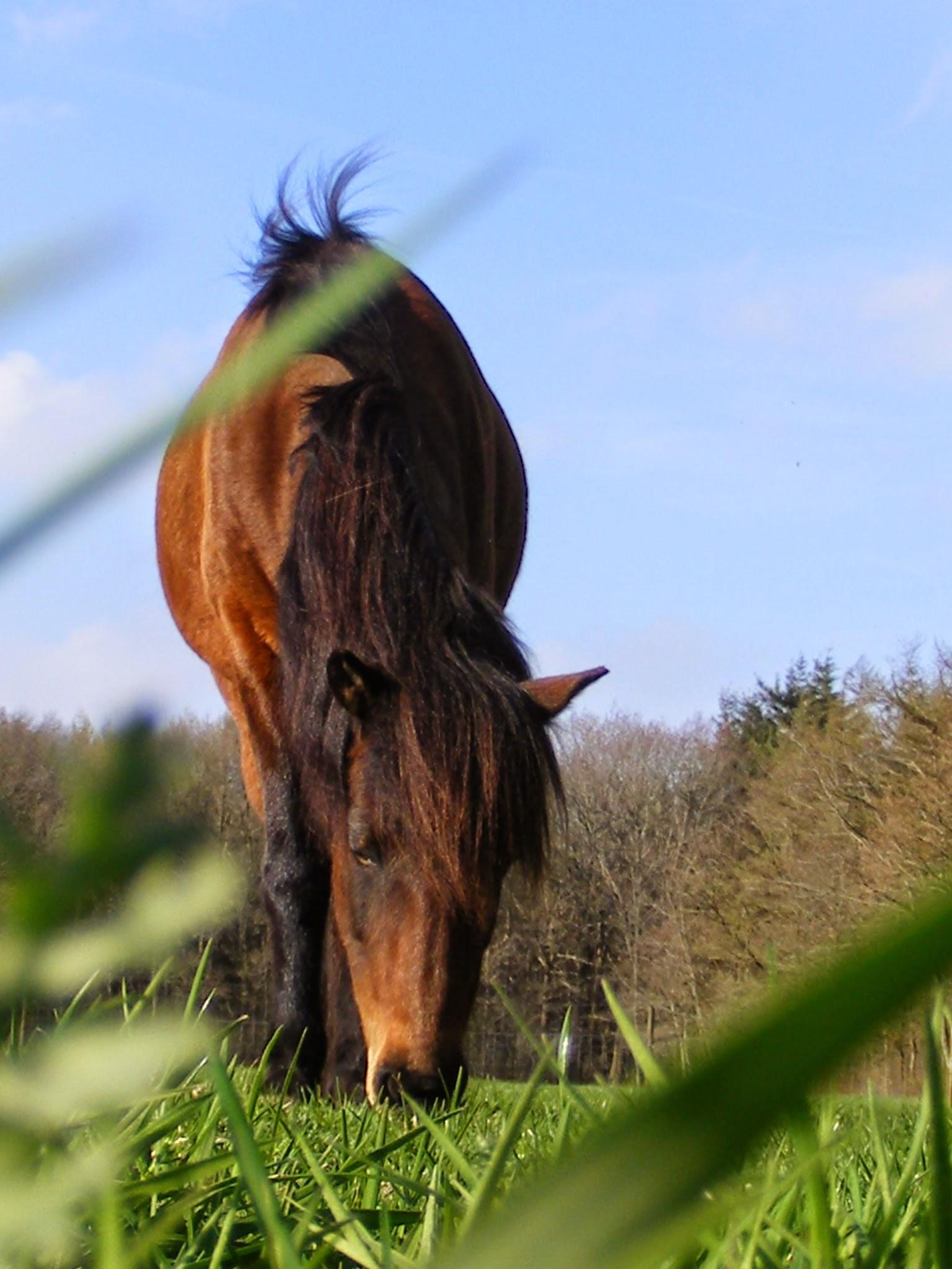 Loswerken met paarden