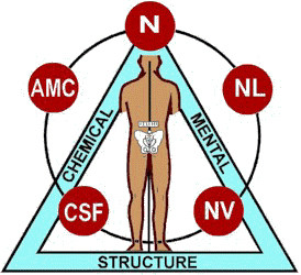 Applied Kinesiology, what is it?