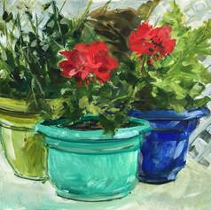 Flower Pots in Yuma AZ