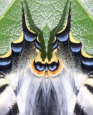 owl face in butterfly wings.jpg